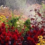 Late summer flower garden