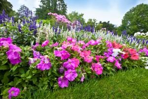 Manicured flower garden