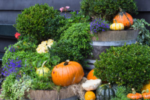 Fall Yard Decoration With Pumpkins And Flowers